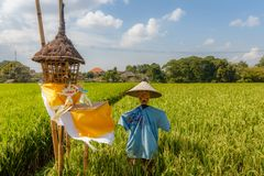 Strach na wróble przy ryżowym polem krajobrazu wiejskiego bali Indonesia zdjęcia royalty free