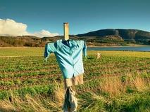 Strach na wróble robić stary odziewa w polu Błękitna koszula i brązu spódnicowy strach na wróble na krzyżu Obraz Stock