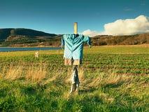 Strach na wróble W irlandczyku Przewodzi mniej strach na wróble w obszarze wiejskim, mały truskawki pole obraz royalty free