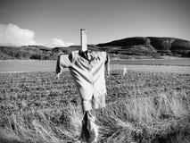 Strach na wróble W irlandczyku Przewodzi mniej strach na wróble w obszarze wiejskim, mały truskawki pole Fotografia Royalty Free