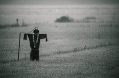Strach na wróble w monochromu zdjęcia stock