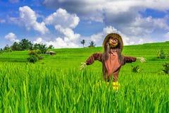 Strach na wróble w ryżowych polach zdjęcie stock