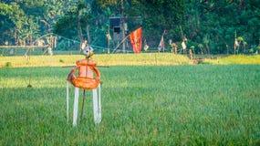 strach na wróble w ryżowym polu zdjęcia royalty free