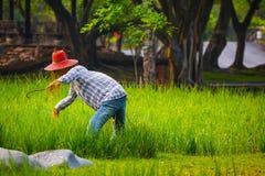 Strach na wróble w ryżowym polu zdjęcie royalty free
