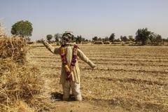 Strach na wróble w wieś krajobrazie z złotymi polami zdjęcia royalty free