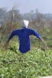 Strach na wróble z Błękitną koszula w polu Obrazy Stock