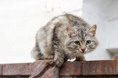 Strach w oczach kota Obraz Stock