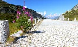 Strada abbandonata della pietra del ciottolo Fotografie Stock Libere da Diritti