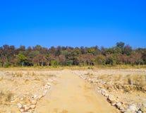 Strada ad una giungla densa Immagini Stock