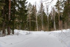 Strada al giro di area della foresta Fotografie Stock Libere da Diritti