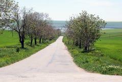 Strada al lago Immagini Stock