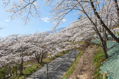 Strada al parco di rovina del castello di Funaoka in Miyagi, Giappone Fotografia Stock Libera da Diritti