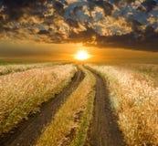 Strada al tramonto in steppa Immagine Stock