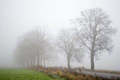 Strada, alberi e nebbia Immagini Stock