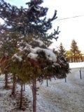 Strada, alberi e neve di Snowy all'inverno fotografia stock