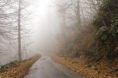 Strada all'interno dei colori di autunno Immagini Stock Libere da Diritti