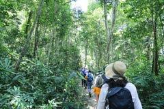 Strada alla caverna di Hang En, nella giungla, la terza più grande caverna dei world's Immagine Stock Libera da Diritti