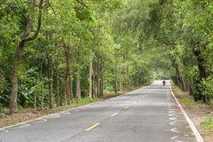 Strada alla foresta Fotografia Stock Libera da Diritti