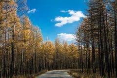 Strada alla foresta Fotografie Stock Libere da Diritti