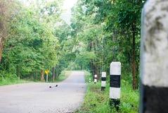 Strada alla foresta Immagini Stock Libere da Diritti