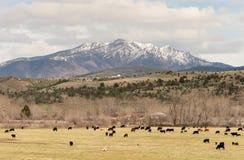 Strada alla montagna del canyon di John Day Oregon Cattle Ranch Immagini Stock Libere da Diritti