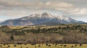 Strada alla montagna del canyon di John Day Oregon Cattle Ranch Immagini Stock