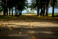 Strada alle foglie gialle Fotografia Stock Libera da Diritti
