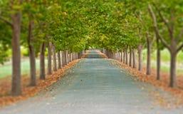 Strada allineata albero Fotografia Stock