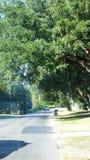 Strada allineata albero Immagini Stock Libere da Diritti