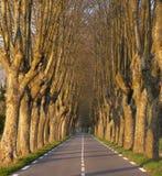 Strada allineata albero al tramonto Fotografia Stock