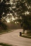 Strada allineata albero vuoto Fotografie Stock