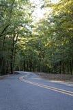 Strada allineata con la leggera curva che conduce attraverso gli alberi verdi alti immagine stock