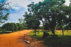 Strada arancio nel parco di Yala Fotografie Stock Libere da Diritti