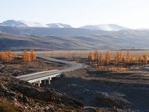 Strada asfaltata in autunno ad alba Fotografia Stock Libera da Diritti