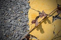 Strada asfaltata con la pianta strisciante Fotografia Stock