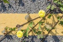 Strada asfaltata con la pianta strisciante Immagini Stock