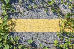 Strada asfaltata con la pianta strisciante Immagini Stock Libere da Diritti