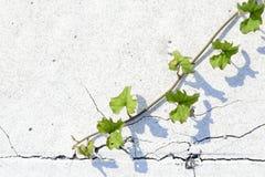 Strada asfaltata con la pianta strisciante Fotografie Stock