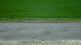 Strada asfaltata e campo verde perfetto video d archivio