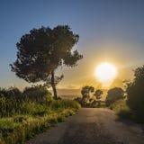 Strada asfaltata, erba dal lato della strada e un albero nella distanza contro il tramonto fotografia stock
