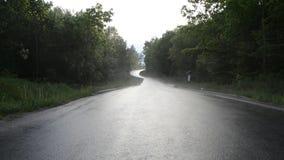 Strada asfaltata in foresta stock footage