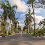 Strada asfaltata incorniciata dagli alberi e dalle palme con il cielo parzialmente nuvoloso in un giorno di estate al parco pubbl Immagini Stock Libere da Diritti