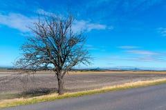 Strada asfaltata nel paesaggio sterile con gli alberi il giorno soleggiato di autunno fotografia stock libera da diritti