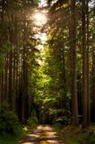 Strada asfaltata nella foresta attillata dell'albero al giorno di estate, luce solare, sole, Atmosfera di distensione Paesaggio d Fotografia Stock