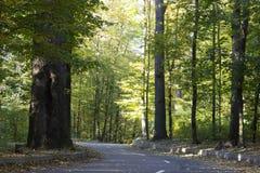 Strada asfaltata nella foresta di autunno un giorno soleggiato fotografia stock