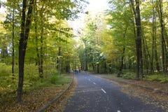 Strada asfaltata nella foresta di autunno un giorno soleggiato fotografie stock