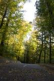 Strada asfaltata nella foresta di autunno un giorno soleggiato immagine stock libera da diritti