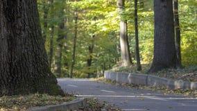 Strada asfaltata nella foresta di autunno un giorno soleggiato immagini stock libere da diritti