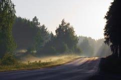 Strada asfaltata nella mattina nebbiosa in anticipo della foresta Fotografia Stock