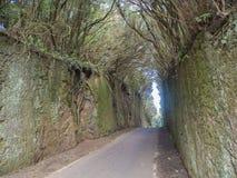 Strada asfaltata stretta che passa attraverso la foresta primaria dell'alloro di mistero fotografia stock libera da diritti
